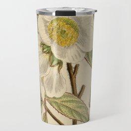 Stewartia sinensis, Theaceae Travel Mug