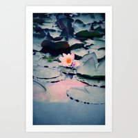 lily Art Prints featuring lily by Claudia Drossert