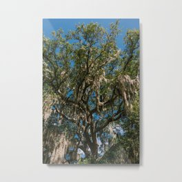 Savannah Spanish Moss II Metal Print