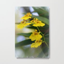 Yellow Orchids Metal Print