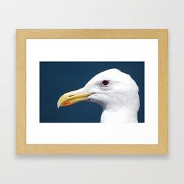 Seagull Portrait2 Framed Art Print