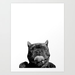 frenchie licking you Art Print