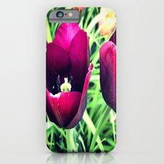 Purple Tulips in Bloom iPhone 6s Slim Case