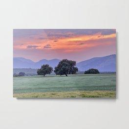 Oaks at sunset. Spring beauty. Spain Metal Print