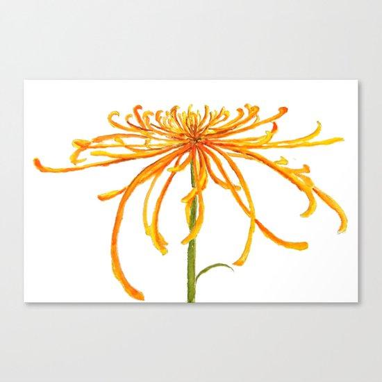one orange chrysanthemum Canvas Print