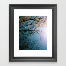 In Bloom (two) Framed Art Print