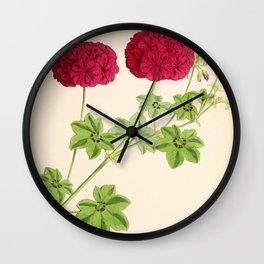 Ivy Leaved Pelargonium Wall Clock