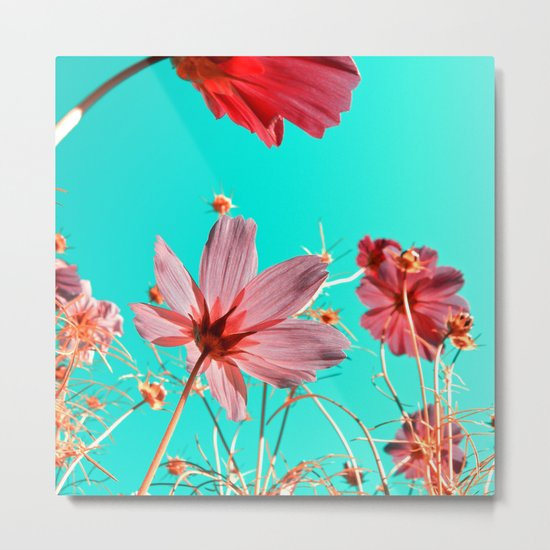 cosmos flowers abstract I Metal Print