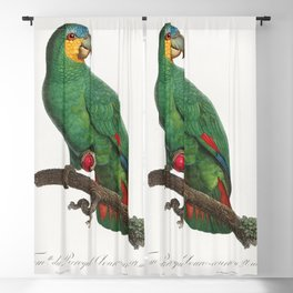 Military Macaw Ara militaris from Natural History of Parrots (1801-1805) by Francois Levaillant Blackout Curtain