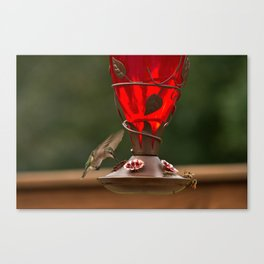 Hummingbird Legend Canvas Print