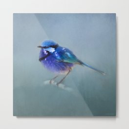 Blue Fairy Wren Metal Print