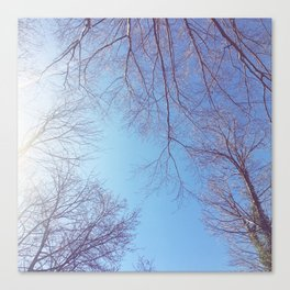 The Trees - Bright Skies Canvas Print