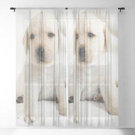Golden labrador puppy Sheer Curtain