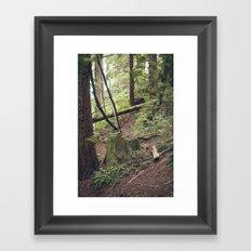 A walk in the Redwoods Framed Art Print