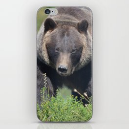 Brown Bear - Alaska iPhone Skin