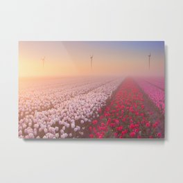 Sunrise and fog over rows of blooming tulips, The Netherlands Metal Print