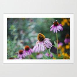 Pink Coneflower Garden Art Print