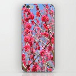 Japanese Spring #1 iPhone Skin