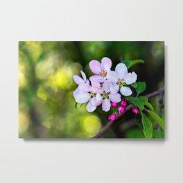 Beautiful Crab Apple Flowers Metal Print