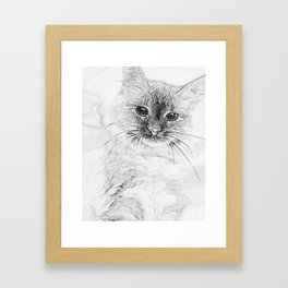 Siberian Kitty Cat Laying on the Marble Slab Framed Art Print