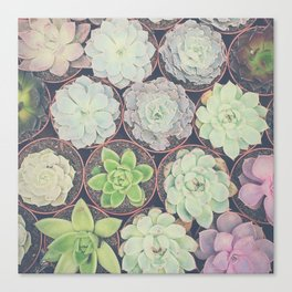 Succulents Have My Heart Canvas Print