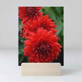 Fresh Rain Drops - Red Dahlia Mini Art Print
