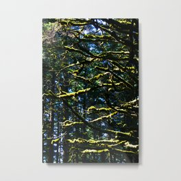 Moss & Branches Metal Print