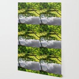 Peaceful Pond Wallpaper