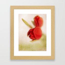 Tulip 2 Framed Art Print