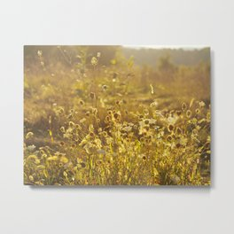 A Field at Golden Hour Metal Print