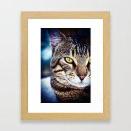 Bengal Tom Tabby Cat Portrait Framed Art Print