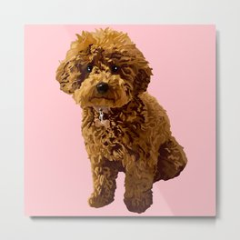 Ginger the toy poodle, a vision in pink Metal Print