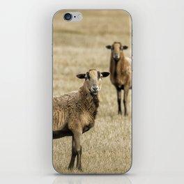 Barbados Blackbelly Sheep iPhone Skin