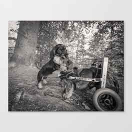 DACKEL DOG PUPPY#1 Canvas Print