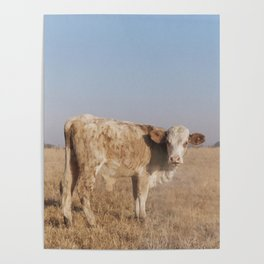 Nowhere Cow Poster