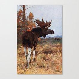 Kuhnert, Friedrich Wilhelm (1865-1926) - Wild Life of the World 1916 v.2 (Elk or Moose) Canvas Print