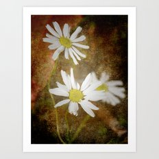 Three Ox Eye Daisies Art Print
