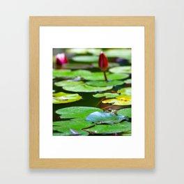 Pond with frog Framed Art Print
