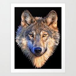 Midnight Wolf Art Print