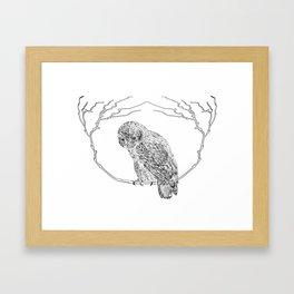 Owl In Tree (Print) Framed Art Print