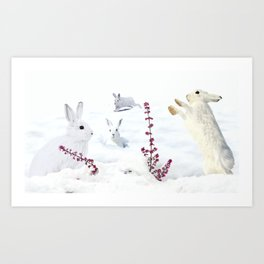White rabbits dancing around red erica in snow mountain. Art Print