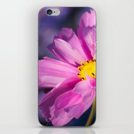cosmea flower iPhone Skin