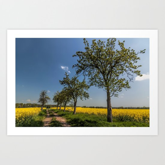 Spring landscape- a trail in the rapeseed Art Print