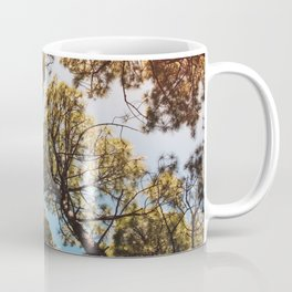 Trees and sky in sunlight- forest landscape - nature photography Coffee Mug