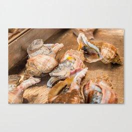 Conch at Tsukiji Fish Market Canvas Print
