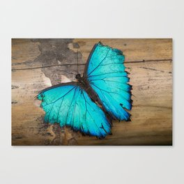 Weathered wings Canvas Print