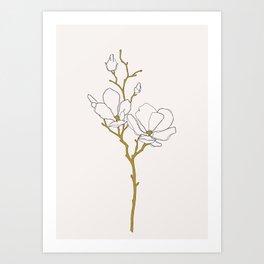 Magnolia botanical illustration - Fran Art Print
