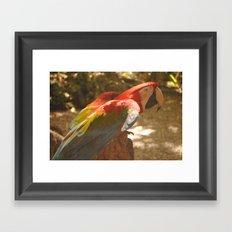 Parrot 1 Framed Art Print