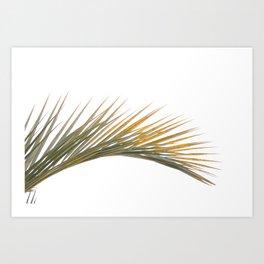 Les feuilles de palmier Art Print