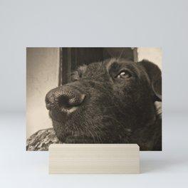 Skeptical Dog Mini Art Print